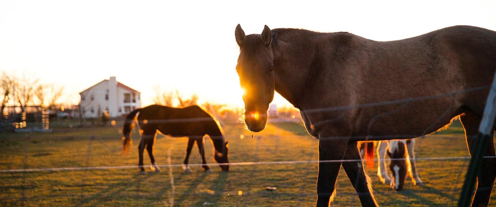 Equitazione - relax - Trentino